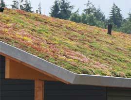 groen dak isoleren