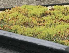 groen dak prijzen